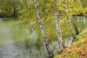 Болдино. Нижний пруд усадьбы