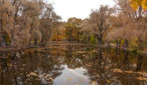 Болдинская осень. Нижний пруд усадьбы