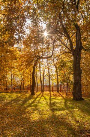 Болдинская осень. В усадьбе А.С.Пушкина