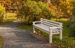 Зеленый кабинет. Скамейка. Усадьба Пушкина. Болдинская осень