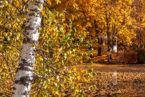 Болдинская осень. Усадьба Пушкина. Нижний пруд