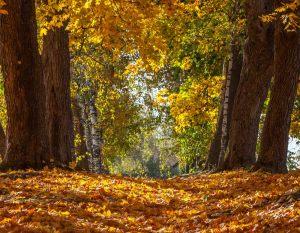 Болдинская осень. Усадьба Пушкина. Нижний парк. Красивые осенние фото