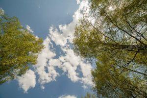 Усадьба во Львовке. Березы и облака