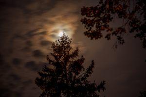 Большое Болдино. Луна и ель у верхнего пруда. Вечернее фото усадьбы Пушкина