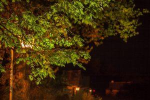 В усадьбе А.С.Пушкина ночь. Фото Большого Болдина